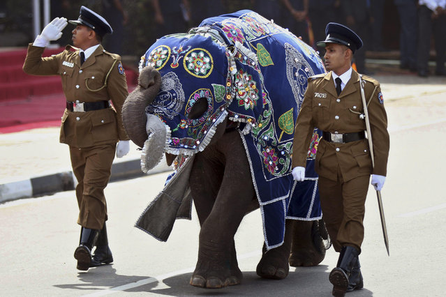 In this May 19, 2015 file photo, Sri Lankan police officers march with a ceremonially dressed elephant calf during a Victory Day parade in Matara, about 165 kilometers (103 miles) south of Colombo, Sri Lanka. (Photo by Nishan Priyantha/AP Photo)