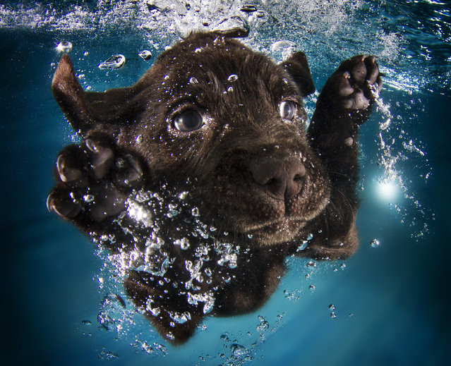 """Underwater Puppies"": Ruger. (Photo by Seth Casteel)"