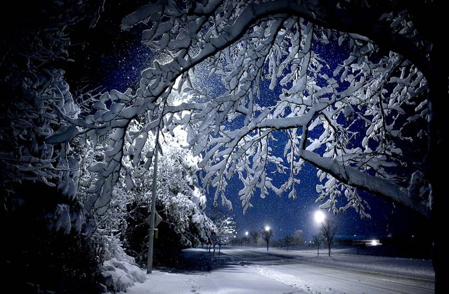 Snow-covered branches frame a late night winter scene off of Dam Neck Road in Virginia Beach, Virginia, as a major storm moves out of the region, leaving over a foot of snow in its wake, December 26, 2010. (Photo by L. Todd Spencer/The Virginian-Pilot)