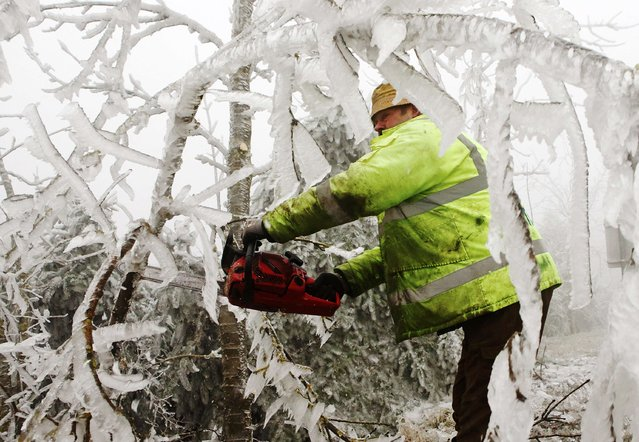 A forester cuts branches of ice covered trees near Kottes in northern Austria, December 2, 2014. (Photo by Heinz-Peter Bader/Reuters)