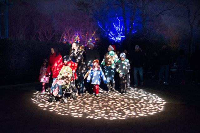 Families pass through spotted lights at Smithsonian National Zoo's annual ZooLights. More than 500,000 LED lights transform the Zoo into a winter wonderland. It runs Until January 1, except December 24, 25, and 31 and admission is free. (Photo by Sarah L. Voisin/The Washington Post)