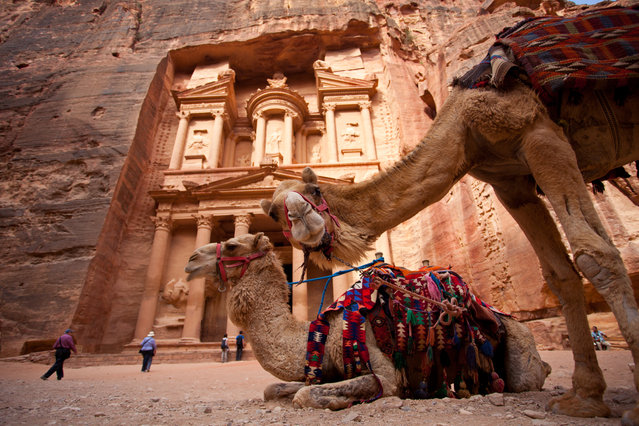 """The curious camel in Petra"". Camel is one of the most iconic species in the deserted area of Petra. In the past it was a mean of transportation and nowadays it give rides to the tourists. On the day I took this picture, I visited Petra in the early morning and I found this two camels were idled in front of the famous spot of Petra, the Treasury. While I was trying to photograph a pair of camel with the Treasury as the background, one of them discover me and turns his head towards me, creating this interesting shot of a curious camel. Location: Petra, Jordan. (Photo and caption by Sai Kit Leung/National Geographic Traveler Photo Contest)"