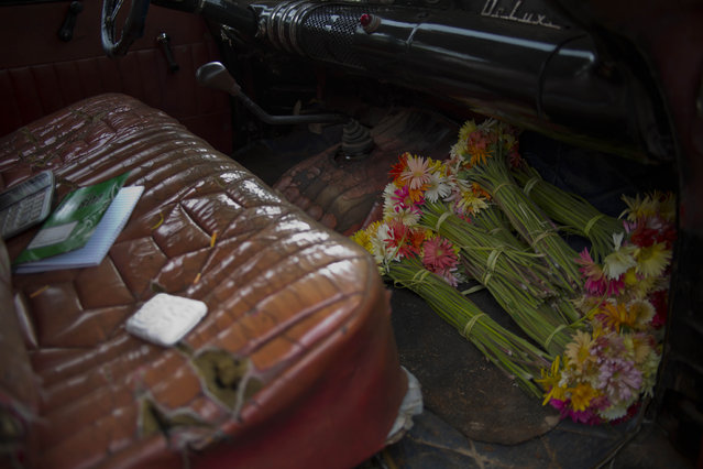 In this Thursday, January 29, 2015 photo, flower bunches occupy the floorboard of a 1957 Buick, rented by flower vendor Yaima Gonzalez Matos, for her bi-weekly rounds to farmers who sell her the blooms, in San Antonio de los Banos, Cuba. Gonzalez joined the ranks of Cuba's small class of entrepreneurs three years ago when she lost her job in human resources at a state-owned enterprise. To support herself and her son, now 11, she followed the example of friends working in the island's new private flower business. (Photo by Ramon Espinosa/AP Photo)