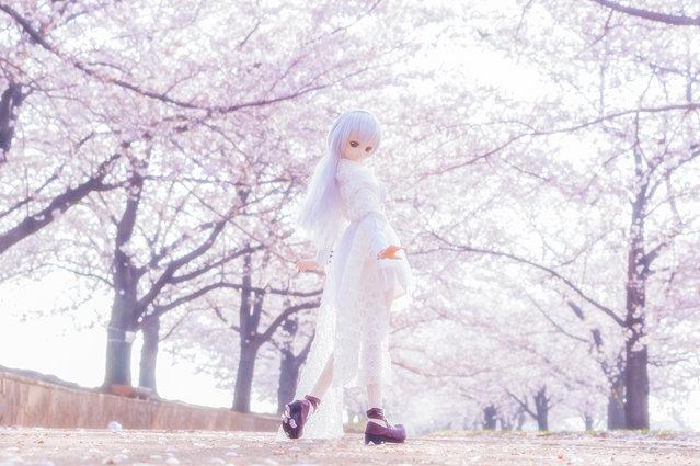 """Cherry blossoms Avenue"". Location: Arakawa riverside, Japan. (Photo and caption by AZURE)"