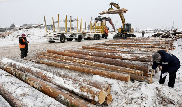 Employees measure the trunk of logs which were transported from a forest, at the Novoyeniseisk wood processing plant, with the air temperature at about minus 20 degrees Celsius (minus 4 degrees Fahrenheit), in the town of Lesosibirsk in Krasnoyarsk Region, Siberia, Russia, February 16, 2016. (Photo by Ilya Naymushin/Reuters)