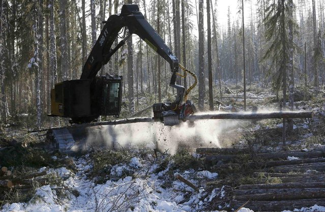 An employee operates a vehicle while cutting a tree at a felling site of the Kraslesinvest state company in the Taiga forest in the interfluve of the Podkamennaya Tunguska and Angara Rivers, located in the Evenkiysky District of Krasnoyarsk region, Russia, February 4, 2017. The northern area of Taiga, also known as the boreal forest famous for the high quality of the Angara pine and larch, is one of the main sites for the industrial cutting of wood. Picture taken February 4, 2017. (Photo by Ilya Naymushin/Reuters)