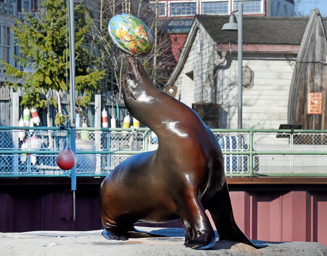 "Sea lion ""Pamela"" balances an Easter egg on her nose at the Yukon Bay department of the theme zoo in Hanover, central Germany, on March 17, 2016. (Photo by Holger Hollemann/AFP Photo)"