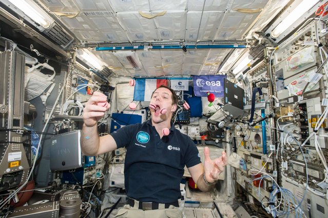 """This handout picture received from the European Space Agency (ESA)/ North American Space Agency (NASA) on February 27, 2017 shows French Austronaut Thomas Pesquet juggling and eating """"Macarons"""" which were specially modified for consumption in space by French master pastry chef Pierre Herme, aboard the International Space Station. Two boxes of seven macarons were baked delivered to Pesquet on the International Space Station in time for his birthday. (Photo by AFP Photo/ESA/NASA)"""