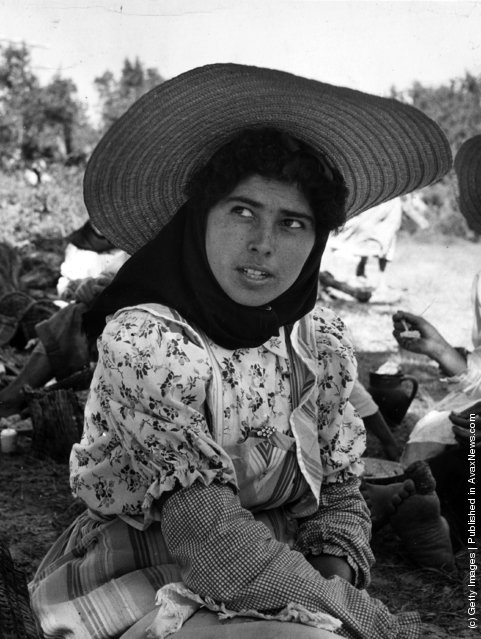 1955: A migrant worker employed on the rice fields of Portugal
