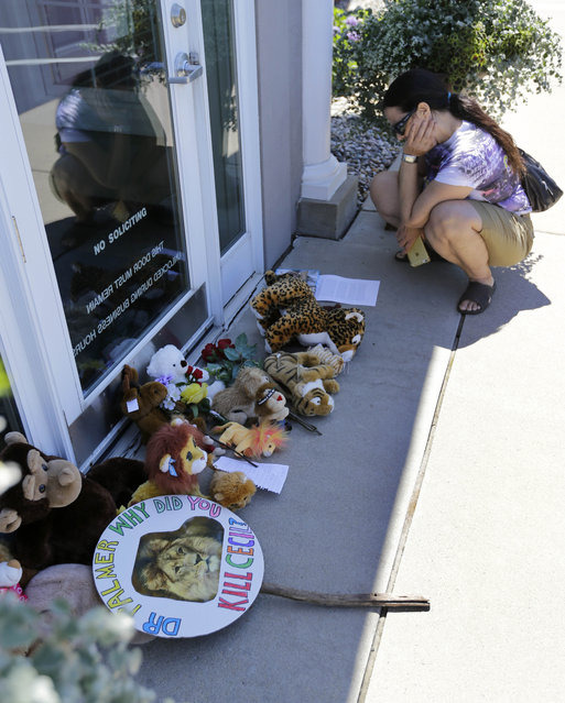 Activist Lisa Berger, of St. Paul, Minn., reads a note among notes and stuffed animals outside Dr. Walter James Palmer's dental office in Bloomington, Minn., Wednesday, July 29, 2015. Palmer allegedly paid $50,000 to track and kill Cecil, a protected lion, just outside Hwange National Park in Zimbabwe. (Photo by Ann Heisenfelt/AP Photo)