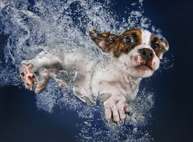 """Underwater Puppies"": Popcicle. (Photo by Seth Casteel)"
