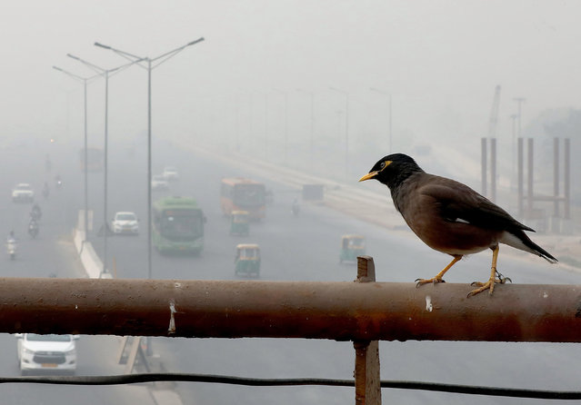 """An Indian Myna bird sits on the railing an overpass as traffic moves on the roads engulfed in smog, in New Delhi, India, 13 November 2017 morning. People in the Indian capital city are struggling with heavily polluted air of which the air quality hit """"severe levels"""" in the past days, media reports state. (Photo by Harish Tyagi/EPA/EFE)"""