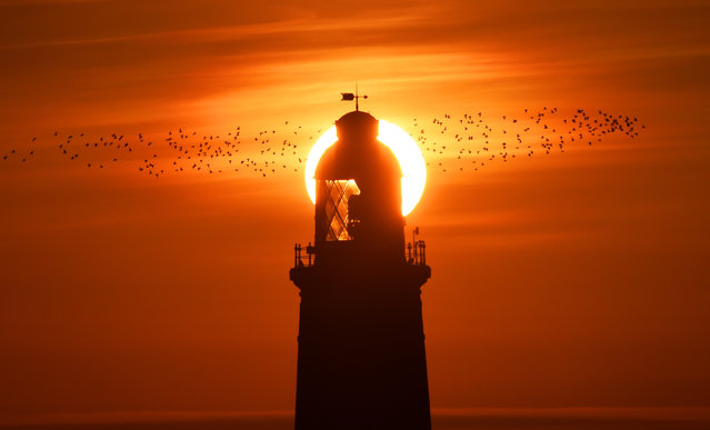 The sun rises over St Mary's Lighthouse in Whitley Bay on the Northumberland coast as a flock of Lapwing seabirds fly past on Wednesday, September 30, 2015. (Photo by Owen Humphreys/PA Wire)