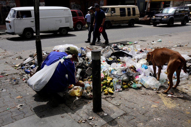 A man searches through garbage for food and recyclable materials near a supermarket in Caracas, Venezuela September 15, 2016. (Photo by Henry Romero/Reuters)