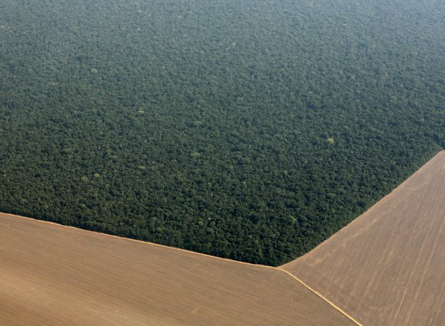 An aerial view shows the Amazon rainforest (top) bordered by land cleared to prepare for the planting of soybeans, in Mato Grosso state, western Brazil, October 2, 2015. (Photo by Paulo Whitaker/Reuters)