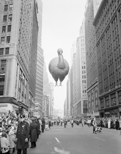 A giant turkey float squeezes between buildings as the 31st annual Macy's Thanksgiving Day Parade moves down Broadway near 37th Street in New York, November 28, 1957. (Photo by John Lindsay/AP Photo)