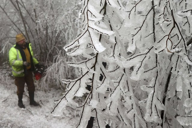 A forester watches ice covered trees near Kottes in northern Austria, December 2, 2014. (Photo by Heinz-Peter Bader/Reuters)