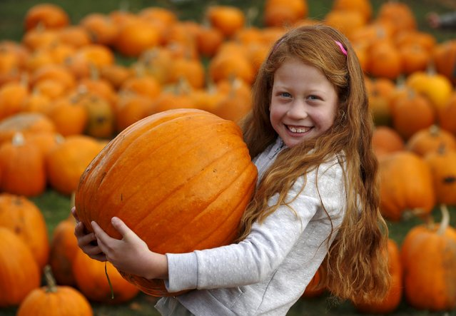 Seven-year-old Darci McCarthy carries a pumpkin in the pumpkin patch ahead of Halloween at Crockford Bridge Farm at Addlestone near Woking, southern Britain October 26, 2015. (Photo by Luke MacGregor/Reuters)