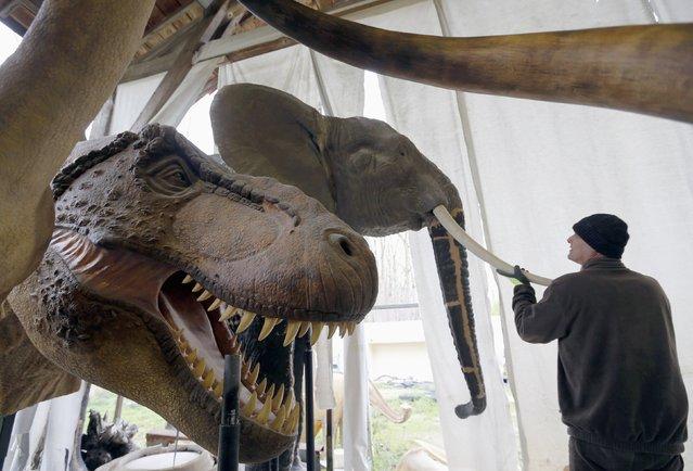 Belgian animal sculptor Emmanuel Janssens Casteels works on replicas of an elephant and a Tyrannosaurus dinosaur in his workshop in Prayssas December 3, 2014. (Photo by Regis Duvignau/Reuters)