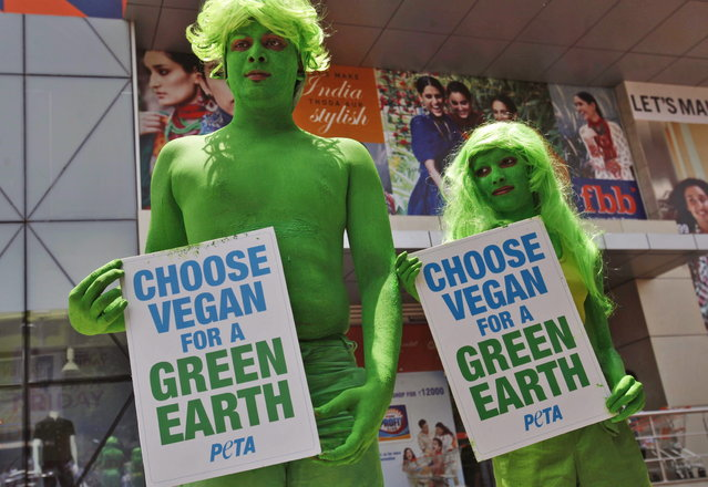Indian activists of the People for the Ethical Treatment of Animals (PETA) with bodies painted in green hold placards during a vegetarianism campaign in Hyderabad, India, Monday, April 22, 2013. The campaign aims to remind people to switch to a healthy, animal and earth friendly vegan diet on the occasion of Earth Day. (Photo by Mahesh Kumar A./AP Photo)