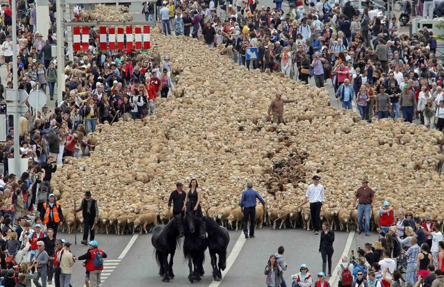 A horsewoman leads thousands of sheep at the Old Port during a  simulation of a transhumance, the seasonal migration when herds are moved to grazing grounds, as part of festivities to mark Marseille-Provence being named the 2013 European Capital of Culture in Marseille June 9, 2013. (Photo by Jean-Paul Pelissier/Reuters)