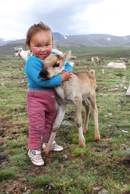 Tuvshinbayar cuddles a baby reindeer. (Photo by Pascal Mannaerts/Rex Feature/Shutterstock)