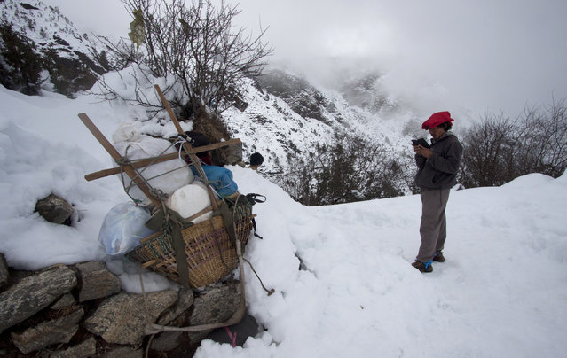 In this Wednesday, March 4, 2015 photo, a porter looks for cell phone signal on the way to deliver a load to Everest base camp near Kyangjuma, Nepal. (Photo by Tashi Sherpa/AP Photo)