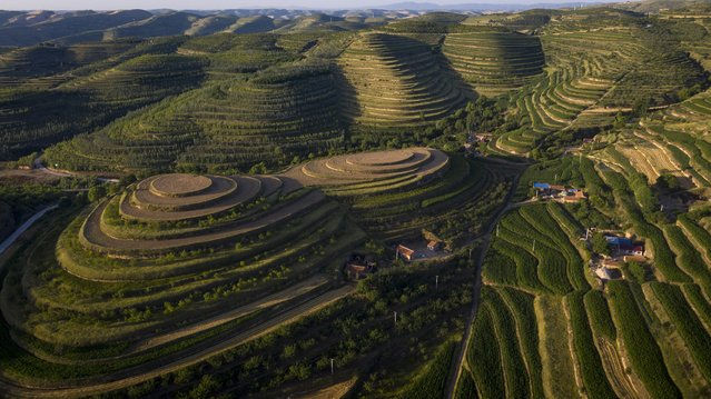 Aerial photo taken on July 13, 2021 shows terraced fields in Pengyang County of Guyuan, northwest China's Ningxia Hui Autonomous Region. (Photo by Feng Kaihua/Xinhua News Agency)