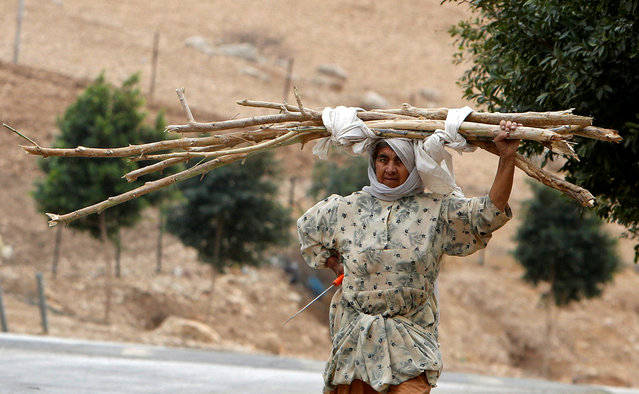 A Palestinian woman carries tree branches to be used for heating and cooking in the West Bank city village of Nassariya near Nablus November 30, 2016. (Photo by Abed Omar Qusini/Reuters)