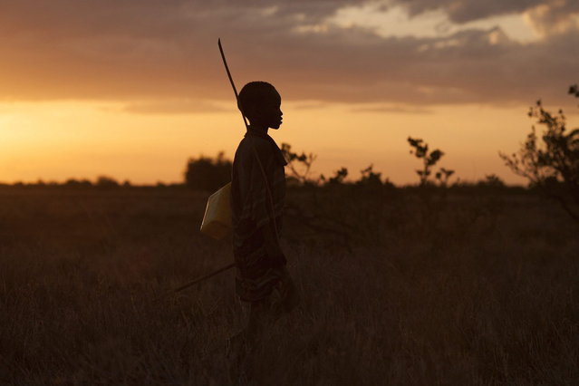 A Turkana boy herds livestock to grazing grounds in the disputed area of the Ilemi triangle in northwestern Kenya near the borders with Ethiopia and South Sudan October 15, 2013. (Photo by Siegfried Modola/Reuters)