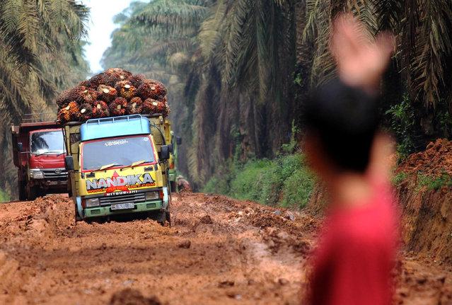 A man assist trucks carry palm oil fruit on a damaged road at Mesuji Raya village in Ogan Komering Ilir, South Sumatra province, Indonesia, January 11, 2017. (Photo by Budi Candra Setya/Reuters/Antara Foto)