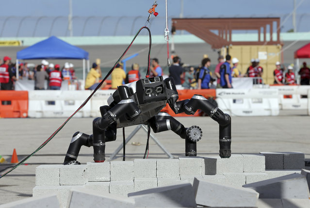 RoboSimian, NASA Jet Propulsion Laboratory, takes a step during the terrain task at the Homestead-Miami Speedway, Friday, Dec 20, 2013, in Homestead, Fla. Seventeen teams from the United States, China, Japan, and Korea are participating in the DARPA Rpbotics Challenge Trials. The event is a test of some of the most advanced robots in the world.  (AP Photo/Alan Diaz)