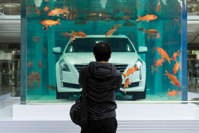 A man looks at a Cadillac CT6 displayed inside a fish tank during an event promoting the car's environmental-friendly features, in Shanghai, China, February 25, 2016. (Photo by Reuters/China Daily)