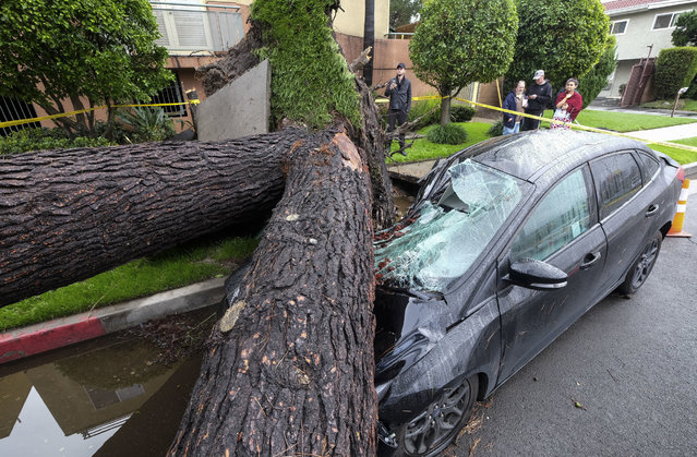 A fallen tree crushes a car outside a residence on Saturday, February 18, 2017, in Sherman Oaks section of Los Angeles. A huge Pacific storm parked itself over Southern California and unloaded, ravaging roads and opening sinkholes. (Photo by Ringo H.W. Chiu/AP Photo)