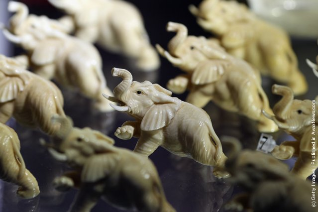Elephants carved from illegal Ivory