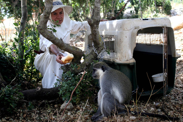 "The monkey Tachtouch is being fed by its French owner Beatrice Mauger in Al Qouzah, southern Lebanon on June 7, 2019. A Lebanese monkey who breached the border with Israel was returned to its owner on June 7 by United Nations peacekeepers after cavorting for more than a week in enemy territory. Its owner, a French nun who describes herself as a ""virgin hermit"", was quick to see the primate's escapade across one of the world's most tense borders as a message of peace. Tachtouch escaped late last month, prompting its owner Beatrice Mauger who runs a peace project in southern Lebanon to launch an appeal on Facebook. (Photo by Mahmoud Zayyat/AFP Photo)"
