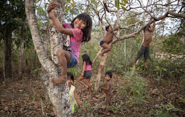 In this August 26, 2019 photo, children of the Nambikwara Sarare tribe climb trees as they play in their indigenous reserve in the southwestern Amazon, near Conquista D'Oeste, in the Brazilian state of Mato Grosso. About 98% of all Brazil's indigenous lands lie within the Amazon. (Photo by Andre Penner/AP Photo)