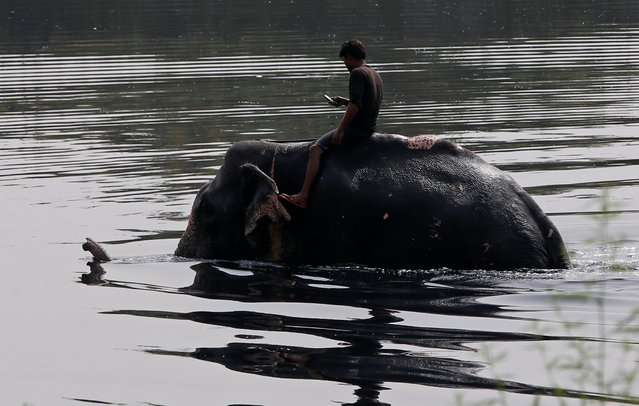 A mahout, or elephant owner, takes his elephant into river Yamuna for a bath on a hot summer day in New Delhi, India April 21, 2017. (Photo by Adnan Abidi/Reuters)