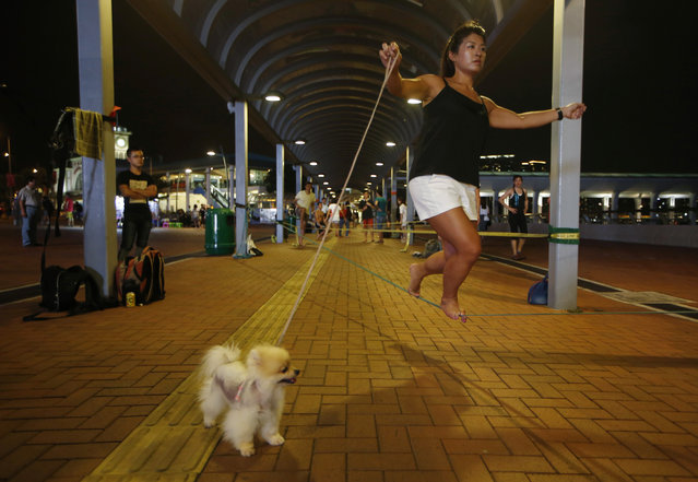 In this Tuesday, July 7, 2015 photo, a woman holds the leash of her dog as she practices slacklining on a street in Central, Hong Kong. (Photo by Kin Cheung/AP Photo)
