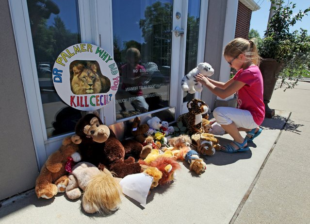 Resident Autumn Fuller, 10, places a stuffed animal at the doorway of River Bluff Dental clinic in protest against the killing of a famous lion in Zimbabwe, in Bloomington, Minnesota July 29, 2015. (Photo by Eric Miller/Reuters)