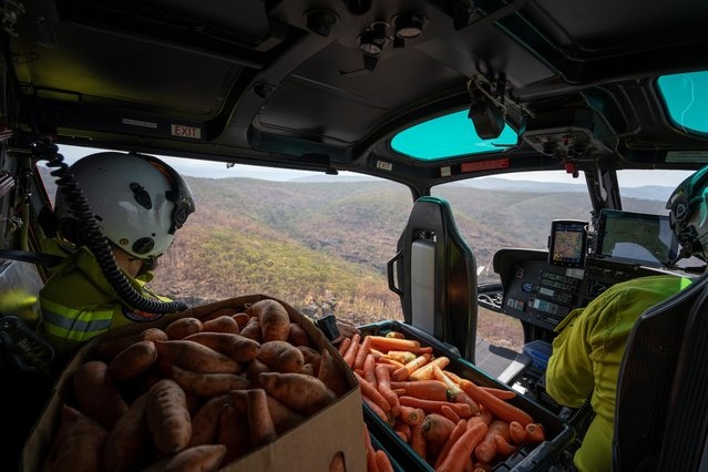 NSW's National Parks and Wildlife Service staff fly with carrots and sweet potatoes before air-dropping them for animals in bushfire-stricken areas around Wollemi National Park, New South Wales, Australia on January 10, 2020. (Photo by NSW DPIE Environment, Energy and Science/Handout via Reuter)