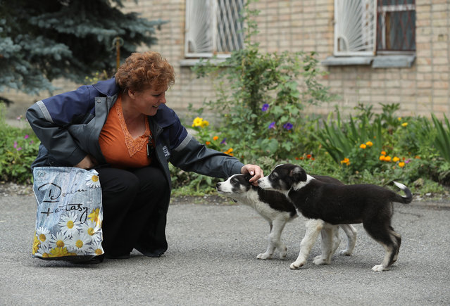 Administration worker Lyudmila Ivanovna greets stray puppies inside the exclusion zone at the Chernobyl nuclear power plant on August 18, 2017 near Chornobyl, Ukraine. (Photo by Sean Gallup/Getty Images)