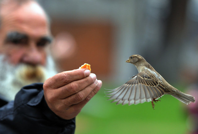 A man feeds a sparrow in the garden of El Prado museum in Madrid on November 16, 2012. (Photo by Dominique Faget/AFP Photo)