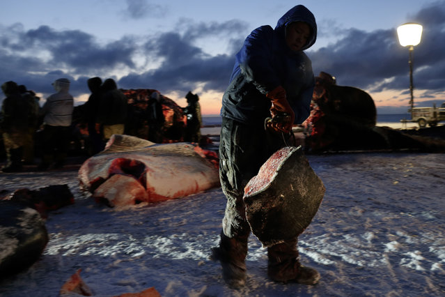 In this October 7, 2014, photo, a man hauls whale blubber as a bowhead whale is butchered near Barrow, Alaska. The whale skin and blubber, known as muktuk, is prized by the Inupiat, and often eaten frozen. (Photo by Gregory Bull/AP Photo)