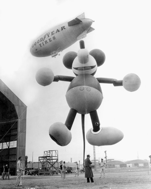 This giant Mickey Mouse balloon, shown tied to dirigible at Glendale, Calf., will be feature of Macy's Thanksgiving Day parade, escorting Santa Claus into New York, 1934. Twenty-five men will be required to handle it. (Photo by NY Daily News Archive via Getty Images)
