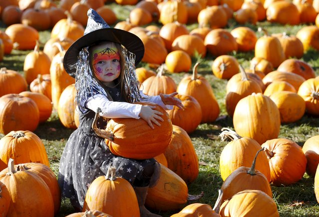 Dressed as a witch, Maisy Thompson plays with pumpkins in the pumpkin patch ahead of Halloween at Crockford Bridge Farm at Addlestone near Woking, southern Britain October 26, 2015. (Photo by Luke MacGregor/Reuters)