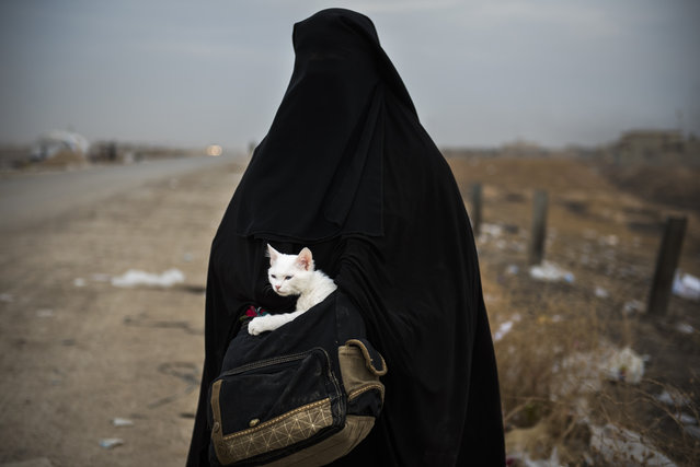 A displaced Iraqi woman holds her cat, Lulu, as she waits for transport in the Iraqi Kurdish checkpoint village of Shaqouli, about 35 kilometres east of Mosul, on November 10, 2016, after she fled her home with her children in the eastern Intisar neighbourhood of the embattled city to take refuge at a camp in Arbil. Iraqi forces are taking part in an operation to recapture Iraq's second city Mosul from Islamic State (IS) group jihadists. (Photo by Odd Andersen/AFP Photo)