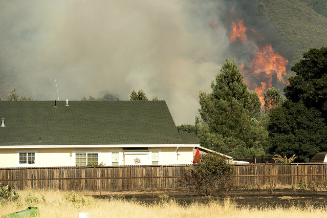 Flames from a wildfire rise above the Spring Lakes community on Sunday, June 24, 2018, near Clearlake Oaks, Calif. Wind-driven wildfires destroyed buildings and threatened hundreds of others Sunday as they raced across dry brush in rural Northern California. (Photo by Noah Berger/AP Photo)