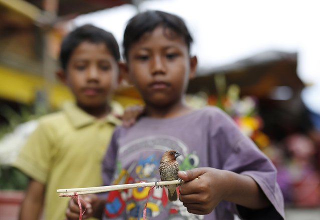 Boys show a finch, one of hundreds kept by a vendor ready to be released for a fee as offerings outside Petak Sembilan Chinese Buddhist temple on the eve of Chinese Lunar New Year celebrations in Jakarta, February 18, 2015. (Photo by Darren Whiteside/Reuters)