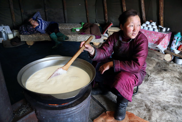 Bolorma boils the daily milk ration the family needs to feed themselves. Afterwards, she will make cheese out of it. (Photo by Pascal Mannaerts/Rex Feature/Shutterstock)